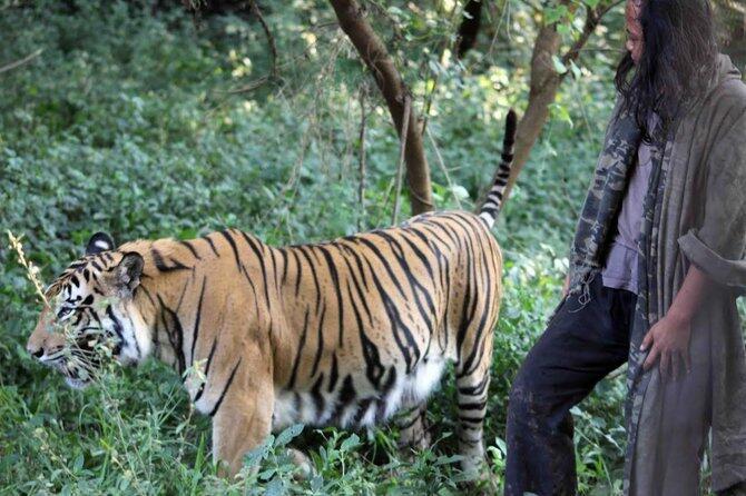 Ala Jungle Book, Pria Asal Malang Tinggal Dengan Harimau 10 Tahun