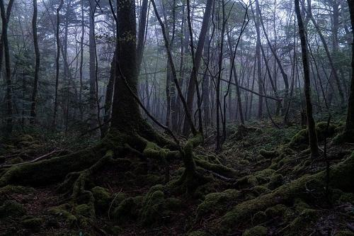 Mengintip Seremnya Wisata di Hutan Aokigahara, Horror Banget!