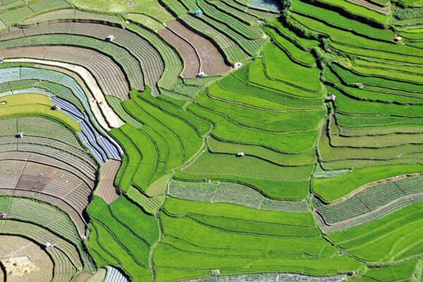 Indonesia Menjadi Contoh Di Bidang Pertanian Kaskus