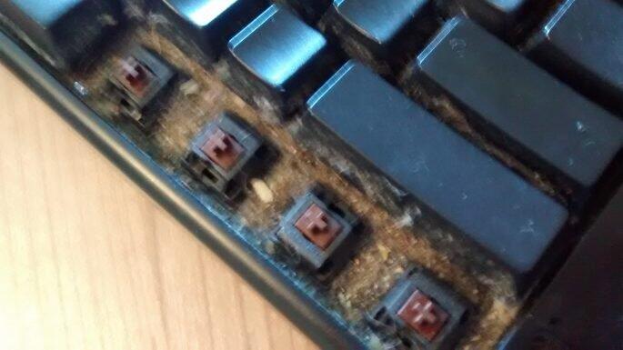 Ini Jadinya Kalau Ente Gak Bersihin Keyboard Sampai 6 Tahun