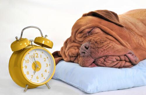 Ciri-ciri Anjing Peliharaan yang Stres
