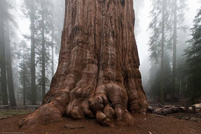 12 Fakta Menarik Mengenai Pohon Terbesar di Planet Bumi