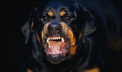 Apakah Memelihara Anjing itu berbahaya ???