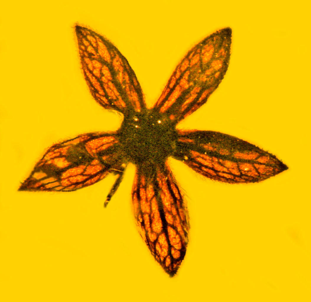 Meski Terlihat Baru Dipetik, 7 Spesimen Bunga Ini Telah Berumur 100 Juta Tahun!