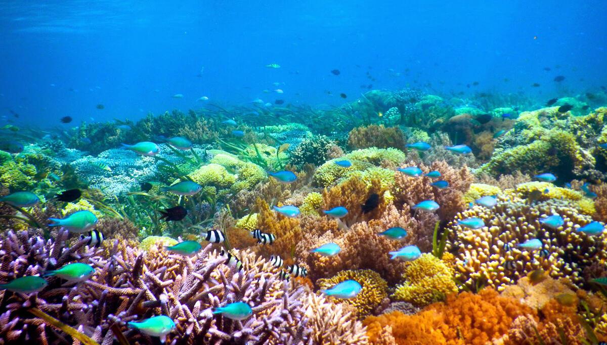 Download 850 Koleksi Gambar Ekosistem Laut Yang Rusak Paling