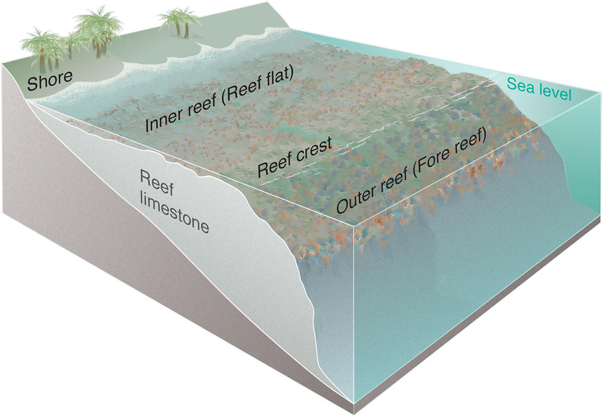 Quotes On Fringing Reefs: Pentingnya Terumbu Karang Bagi Ekosistem Laut Dan