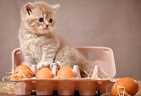 5 Makanan Manusia Yang Aman Dikonsumsi Kucing Peliharaanmu