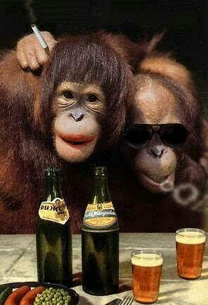 Yang Akan Terjadi Bila Hewan Diberikan Alkohol Terus-menerus