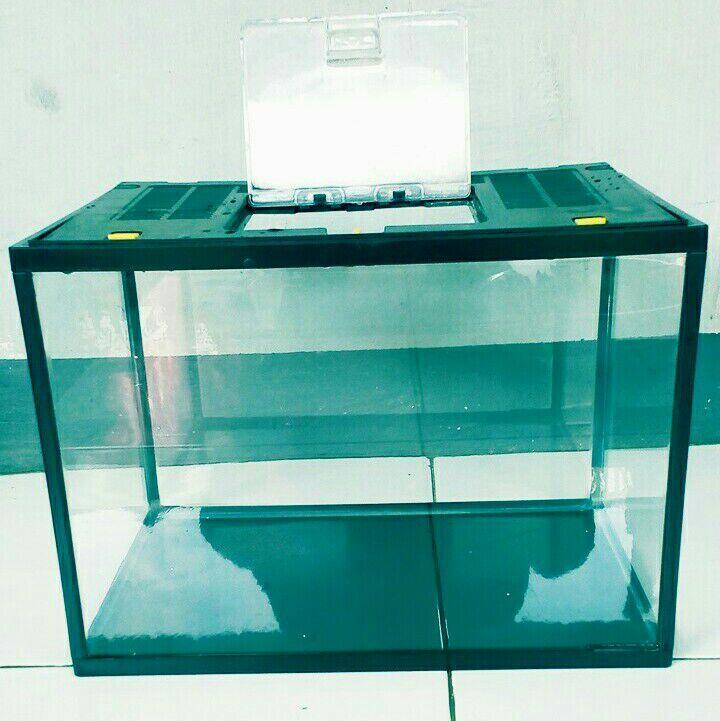 Memelihara Ikan Di Aquarium Kecil Kaskus