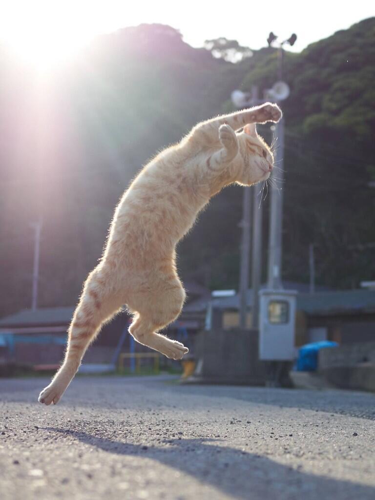 Begini Kalo Kucing Lagi Beraksi !!
