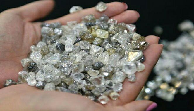 Inilah 4 Fakta Pandan Langka yang Jadi Pertanda Berlian Berharga Bikin Kaya