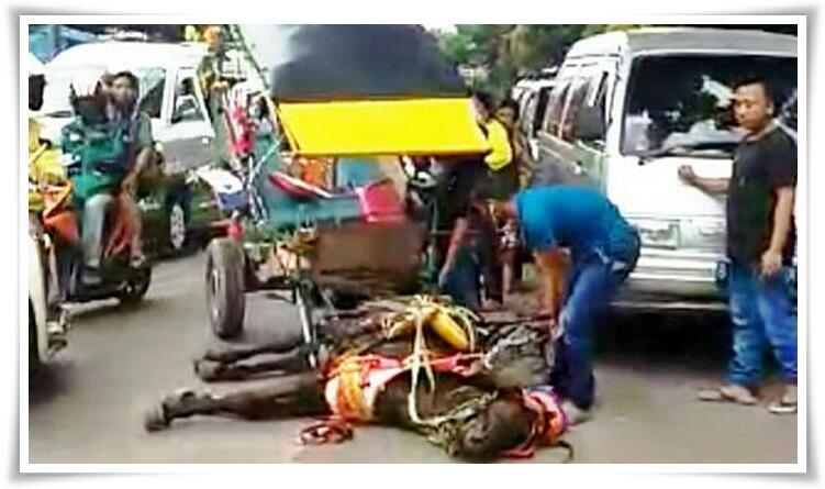 Hati-Hati Gan, Jangan Pernah Menelantarkan Atau Menyiksa Hewan, Ini Ganjarannya!