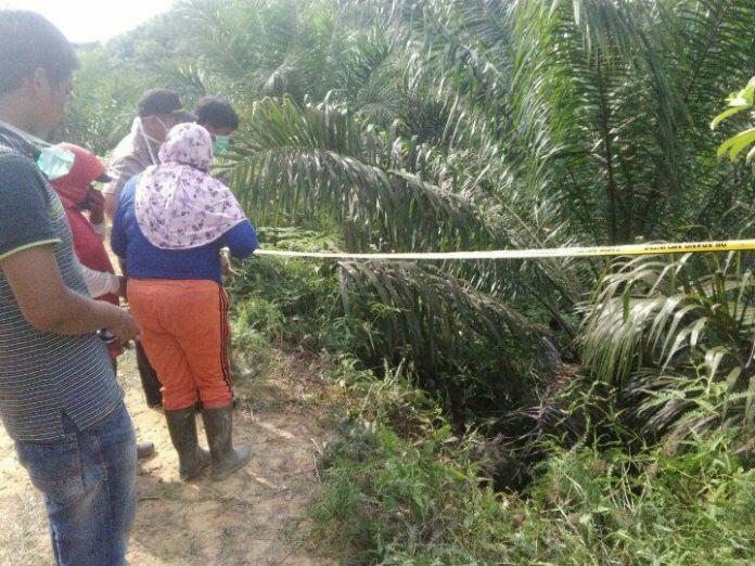 Dua Buronan Pembunuh Sadis di PT TPIL Tebo Ditangkap