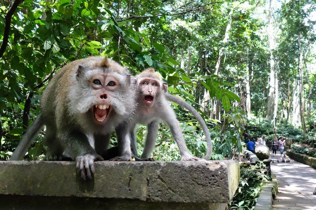 Wisata Alam di Ubud Monkey Forest Bali