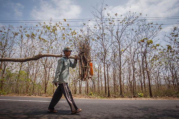 Kredit Tunda Tebang Selamatkan Pohon