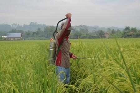 Petani Indramayu Evaluasi Hasil Pengamatan Cuaca