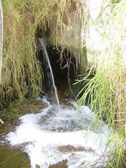 [EVENT LINGKUNGAN] Bahaya Limbah Detergen Dalam Lingkungan Hidup