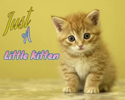 Just A Little Kitten [TAMAT]