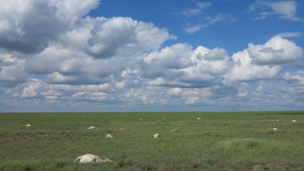 Terkuak, Misteri Kematian Massal 200 Ribu Antelop di Kazakhstan
