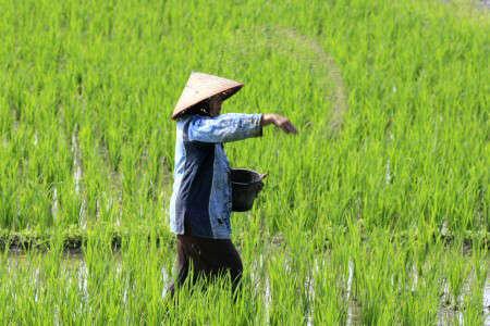 Petani Flores Timur Manfaatkan BUMDes untuk Distribusi