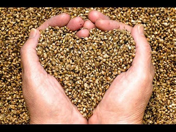 Gak Makan Daging, Vegan Dapetin Protein Dari Ini Gan!