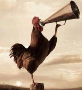 """Ini dia asal usul kenapa ada istilah """"rejeki dipatok ayam"""", Agan udah tau?"""