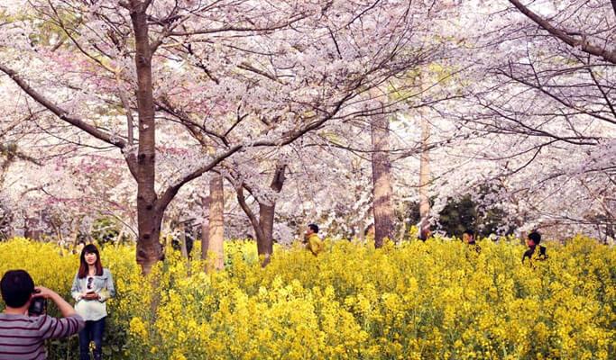 Mimpi Habiskan Spring di Korea Selatan? Cek Hot Spot-nya Dulu Nih Gan!