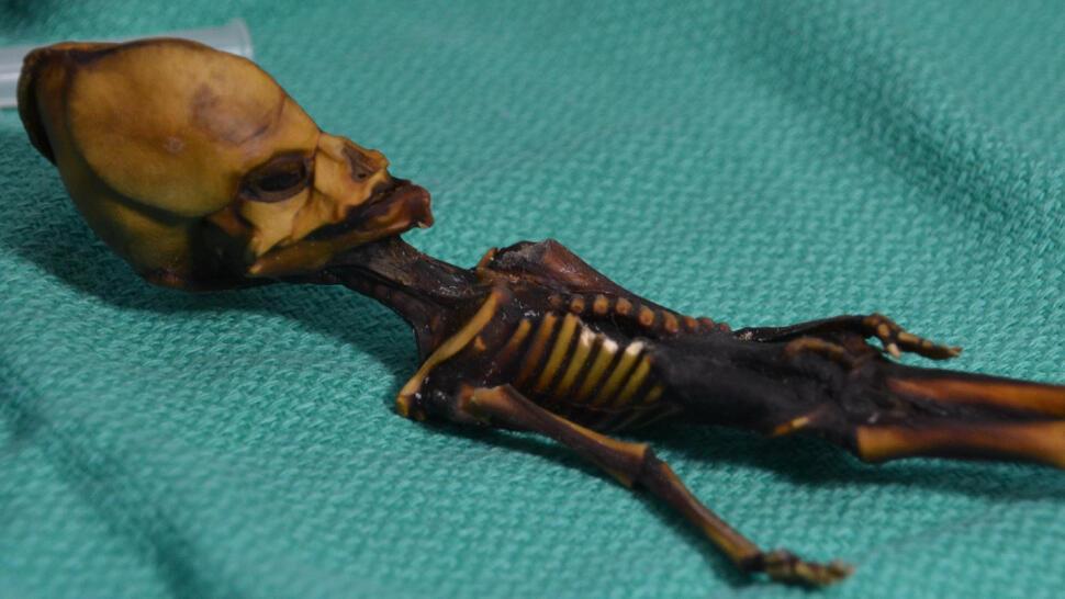 Ata, Mumi 16 cm Ternyata Bukan Alien. Tapi Kenyataannya Justru Lebih Ajaib Dari Itu.