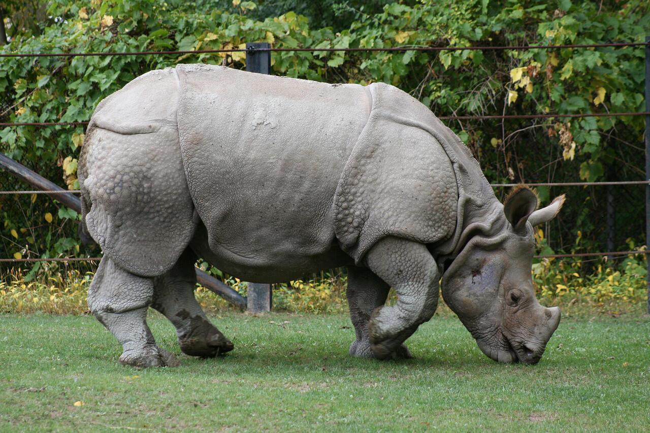 Jenis-Jenis badak yang ada di dunia #SaveRhinos