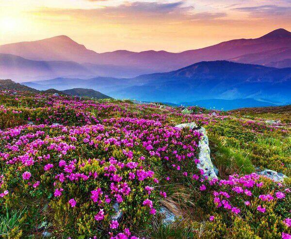 Valley of Flowers, Lembah Bunga Seindah Surga dari India