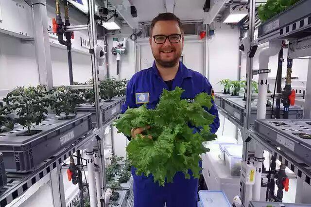 Ilmuwan Berhasil Tanam Sayuran di Antartika Tanpa Tanah dan Sinar Matahari