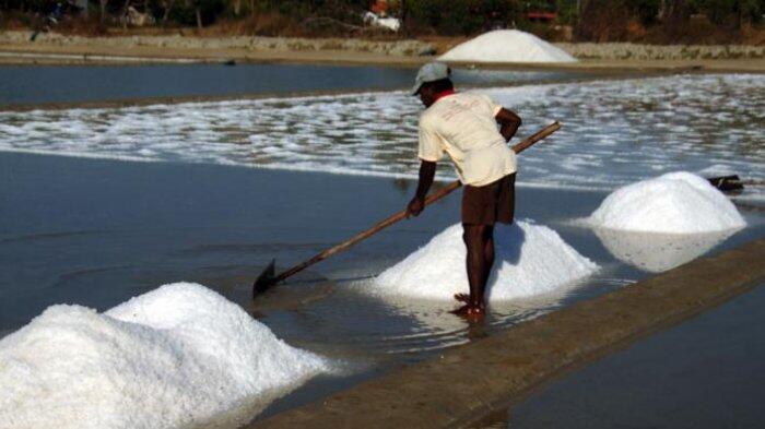 Nggak Usah Impor, Petani Lokal Yakin Bisa Penuhi Kebutuhan Garam Nasional