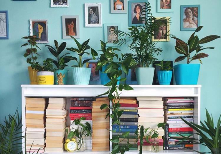 5 Tanaman Herbal Yang Mudah Ditanam Di Rumah
