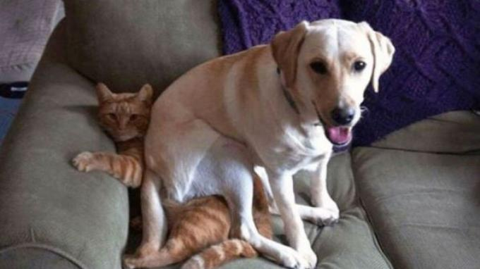 6 Kelakukan Konyol Hewan yang Bisa Usir Bad Mood!