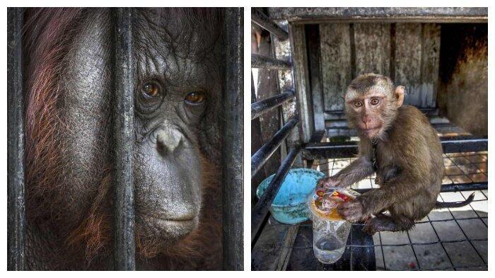 Miris! 10 Potret Ini Tunjukkan Penderitaan Satwa di Kebun Binatang Thailand