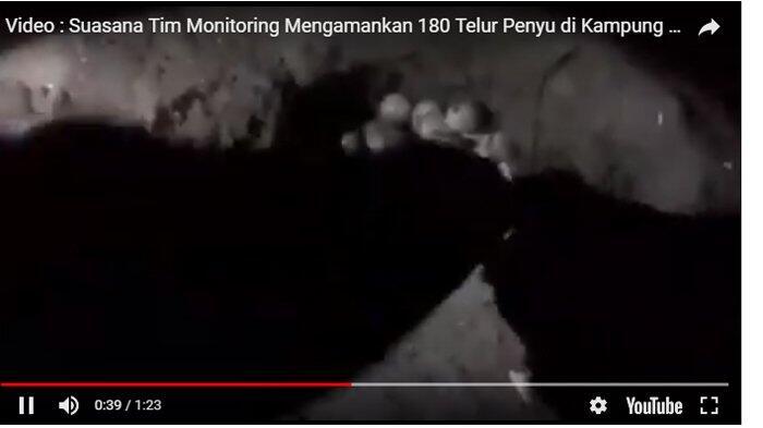 Tim Monitoring Amankan 180 Telur Penyu di Desa Barugaia Selayar