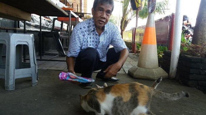 Kisah Pensiunan Dosen Yang Gunakan Hari-harinya memberi Makan Kucing Liar