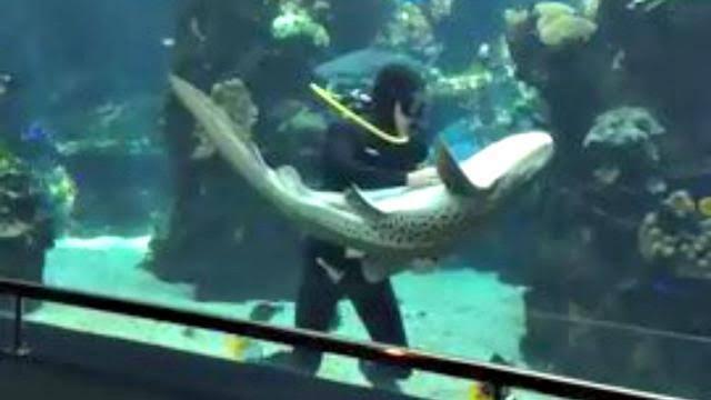 Kenapa Ikan Hiu Di Akuarium Tak Menyerang Ikan Yang Kecil