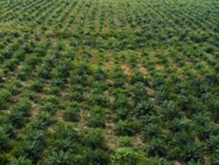 Mendorong Industri Kelapa Sawit Menggunakan Sains dan Teknologi