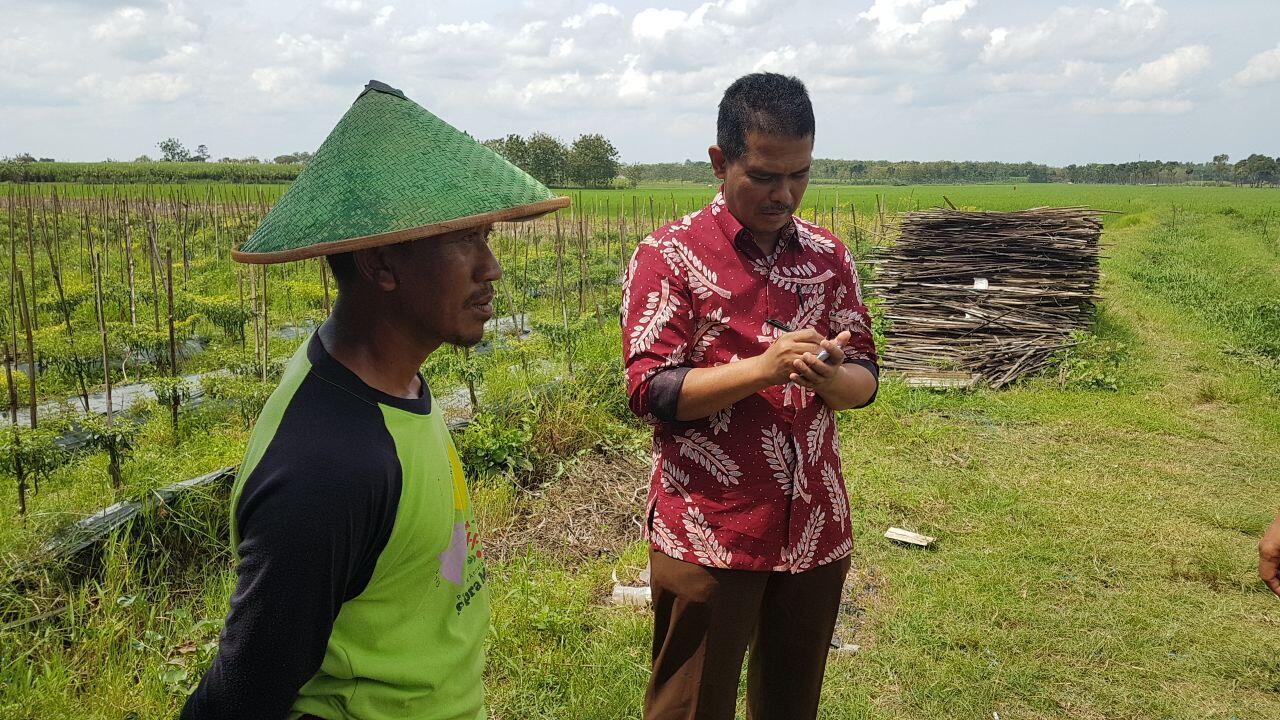 Jawa Tengah Siap Pasok Bawang Merah dan Cabai ke Jakarta Selama Ramadhan