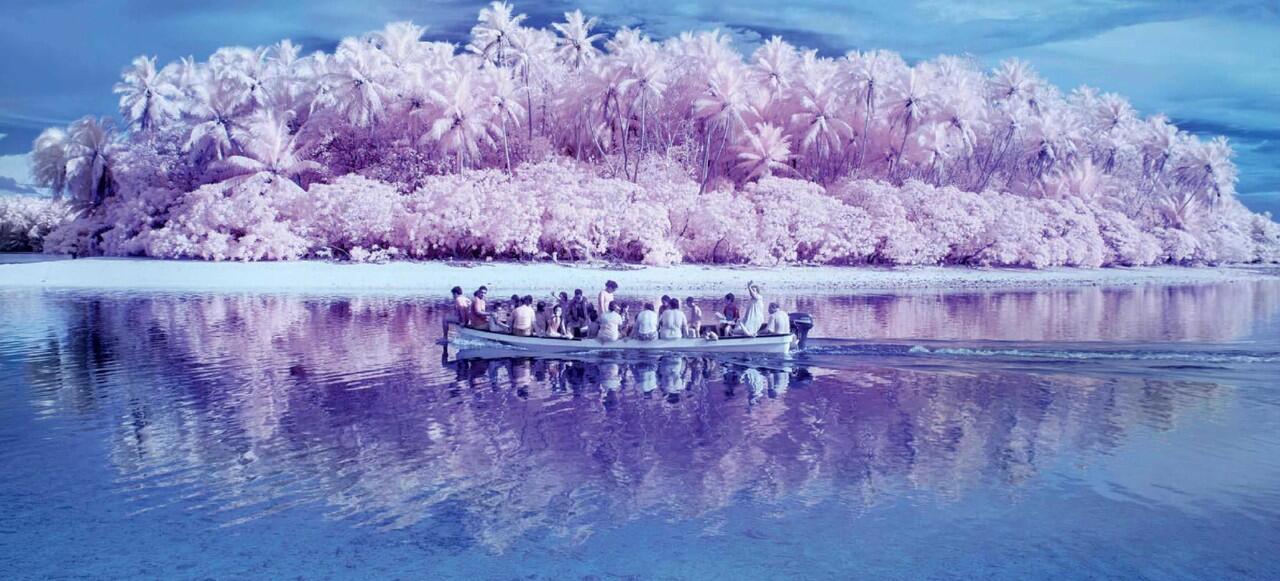 Di Pulai Ini, Daun Itu Warnanya Pink Gan!