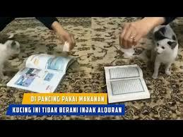 Video Kucing Tak Mau Melangkahi Al Qur'an