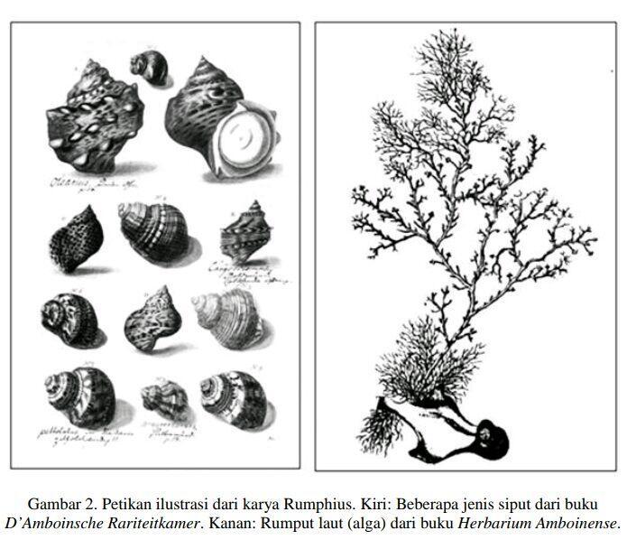 Rumphius : Cendikiawan Buta Dari Ambon