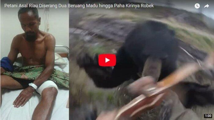Petani Asal Riau Diserang Dua Beruang Madu hingga Alami Luka Serius