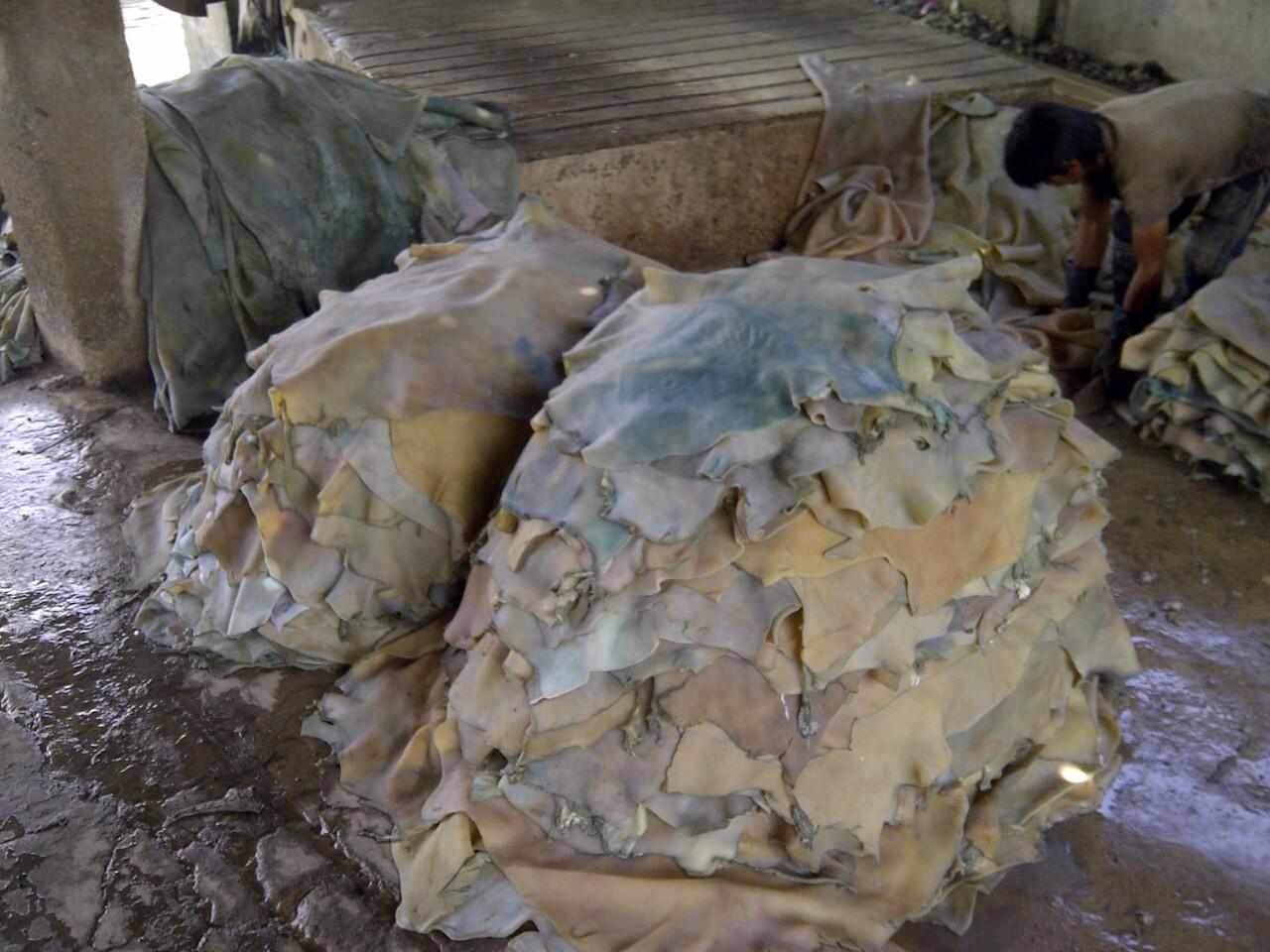 (Share) Bisnis kulit samak sapi, domba, kambing mulai dari resep s/d pemasarannya