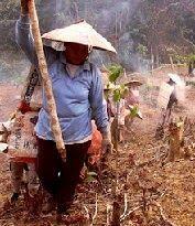 Alat-alat Pertanian Tradisional Banjar Kalsel