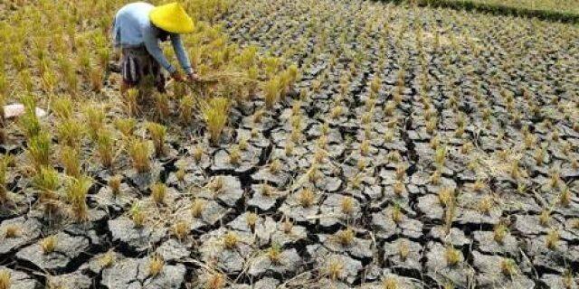 [COC GL] Degradasi Ekosistem Ubah Siklus Air Dunia