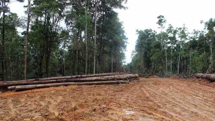 Diduga Lakukan Ilegal Logging, PT Strata Pasific Diprotes Warga