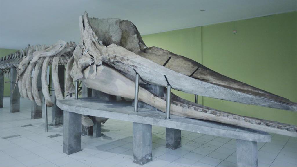 Menyambangi Museum Paus Sperma di Pulau Tidung