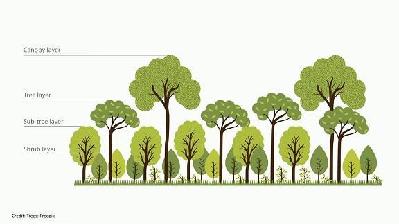 [COC GL] Cara Membangun Hutan secara Alami, Cepat, dan Dapat Dilakukan Di Manapun